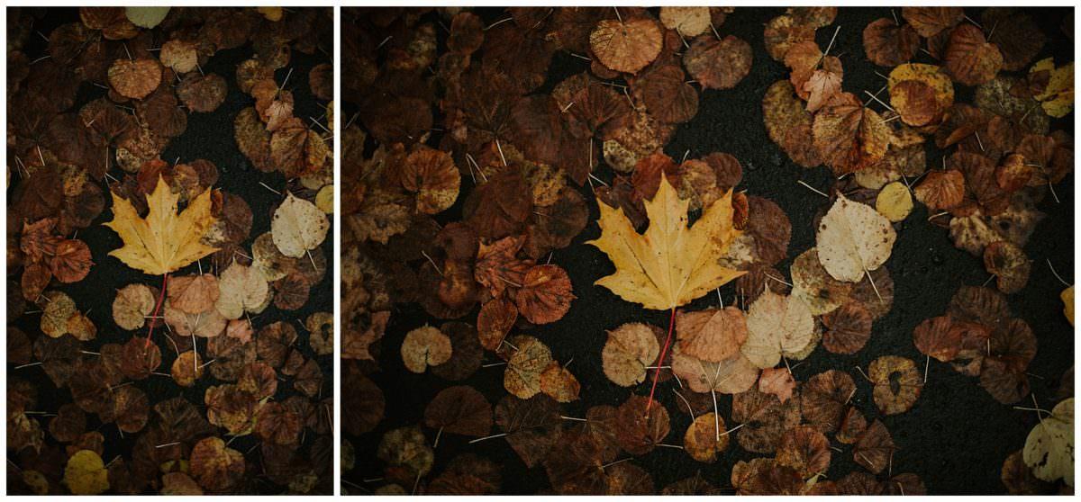 Edinburgh autumn session