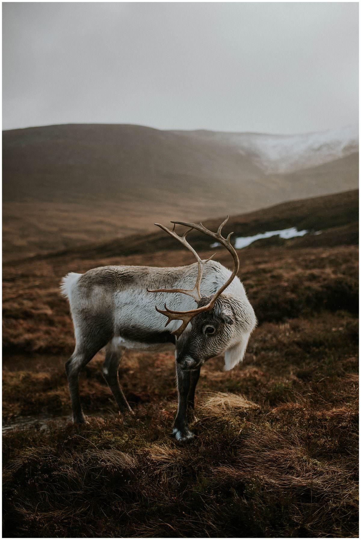 Cairngorms Reindeer Centre