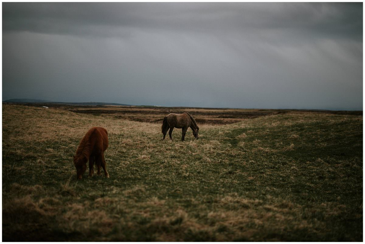 Wild horses in Iceland - Iceland photographer